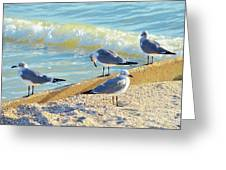Seagulls On Wall Greeting Card