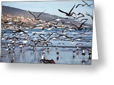 Seagulls Seagulls And More Seagulls Greeting Card