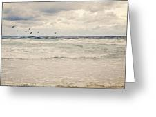 Seagulls Take Flight Over The Sea Greeting Card