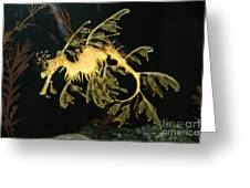 Seahorse Shuffle Greeting Card