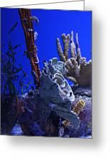Seahorses Greeting Card
