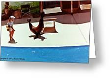 Seal And Ball Greeting Card
