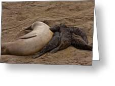 Seal And Pups Greeting Card