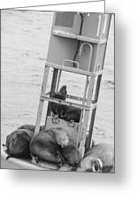 Seal Hammock Black And White Greeting Card