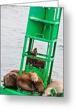 Seal Hammock Greeting Card