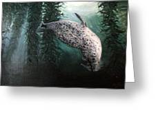 Seal In The Kelp Greeting Card