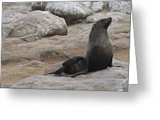 Seal In The Sun Greeting Card
