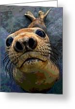 Seal Pup Greeting Card