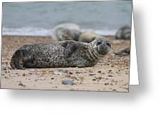 Seal Pup On Beach Greeting Card