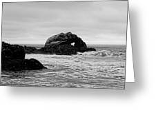 Seal Rock Greeting Card