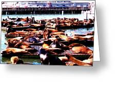 Seal Wharf Greeting Card