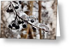 Sealed In Ice Greeting Card