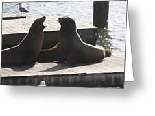 Sealion Discussion Greeting Card