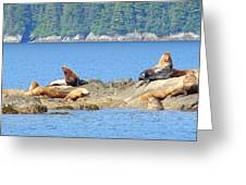 Seals 3 Greeting Card