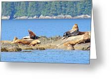 Seals In Alaska 1 Greeting Card