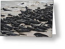 Seals On The Blasket Island Greeting Card