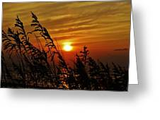 Seaoats And Sunrise Hatteras Island 1 7/31 Greeting Card