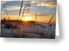 Seaoats Sunrise Greeting Card