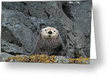 Seaotter - The Old Man Greeting Card