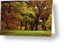 Searching For Maple Magic Greeting Card
