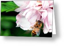 Searching Pink Flower Greeting Card