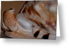 Seashell Abstract 1 Greeting Card