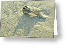 Seashell And Shadow On Sand Greeting Card