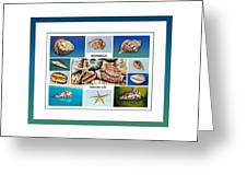 Seashell Collection 4 - Collage Greeting Card