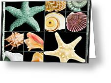 Seashell Collection Greeting Card