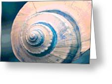 Seashell In Pastel Greeting Card