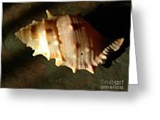 Seashell On Granite Greeting Card
