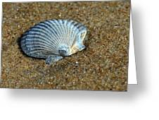 Seashell On The Beach Greeting Card