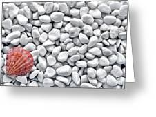 Seashell On White Pebbles Greeting Card