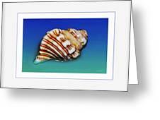 Seashell Wall Art 1 - Blue Frame Greeting Card