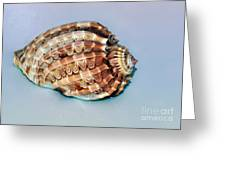 Seashell Wall Art 9 - Harpa Ventricosa Greeting Card