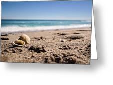 Seashells At The Shore Greeting Card