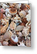 Seashells - Vertical Greeting Card