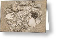 Seashells Collection Drawing Greeting Card