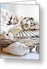 Seashells Greeting Card by Elena Elisseeva
