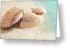 Seashells In The Wet Sand Greeting Card
