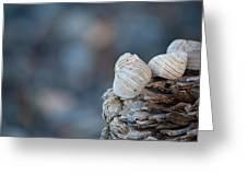Seashells On Driftwood  Greeting Card