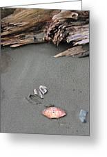 Seashells On The Seashore II Greeting Card