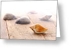 Seashells On Wood Dock Greeting Card