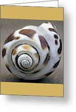 Seashells Spectacular No 2 Greeting Card