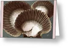Seashells Spectacular No 22 Greeting Card by Ben and Raisa Gertsberg