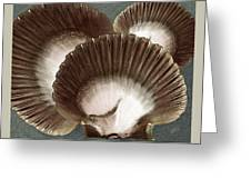 Seashells Spectacular No 22 Greeting Card