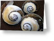 Seashells Spectacular No 23 Greeting Card