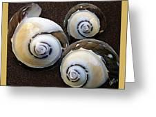 Seashells Spectacular No 23 Greeting Card by Ben and Raisa Gertsberg