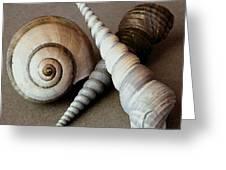Seashells Spectacular No 24 Greeting Card