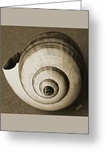 Seashells Spectacular No 25 Greeting Card